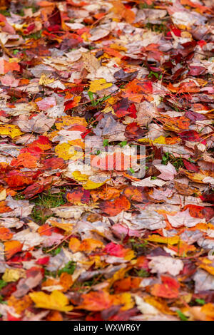 Fallen autumn leaves on the forest floor. - Stock Photo