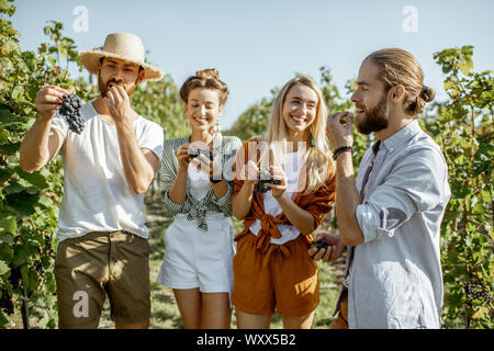 Group of a young friends tasting grapes on the vineyard, having fun while hanging out together at the winery on a sunny morning - Stock Photo
