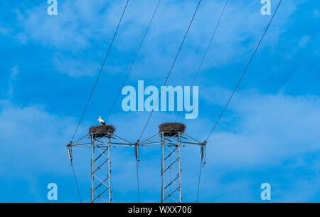 White Stork (Ciconia ciconia) nesting on pylons, Montana Palentina, Palencia, Castilla y Leon, Spain, Europe - Stock Photo