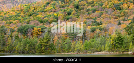 The Fall colours of Aspen and Maple trees at picturesque and spectacular The Equinox Mountain in Manchester, Vermont, USA