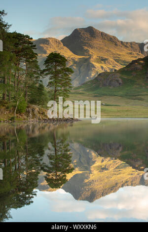 Blea Tarn Lake District National Park with the Langdale Pikes in the distance reflecting on the lake during a sunrise and some mist on the surface of