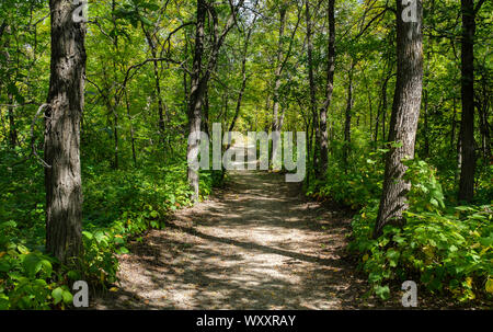 A path through late summer forest at Spruce Woods Provincial Park in Southern Manitoba, Canada - Stock Photo