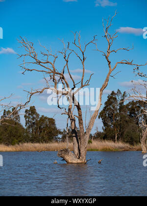 Wetland bird habitat at Warren in outback New South Wales Australia. A popular travel destination from Dubbo. - Stock Photo
