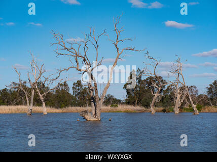 Wetland bird habitat at Warren New South Wales Australia. A popular destination from Naromine and Dubbo. - Stock Photo