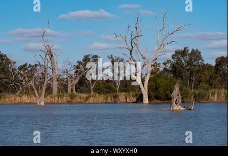 Wetland bird habitat at Warren New South Wales Australia.   A popular travel destination for bird watchers in outback New South Wales Australia. - Stock Photo