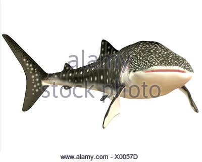 Whale Shark Profile - Stock Photo