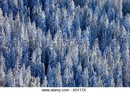 snow-covered conifer forest from above, Switzerland, Schweizer Voralpen, Gurnigel - Stock Photo
