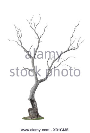tree burnt by fire - Stock Photo