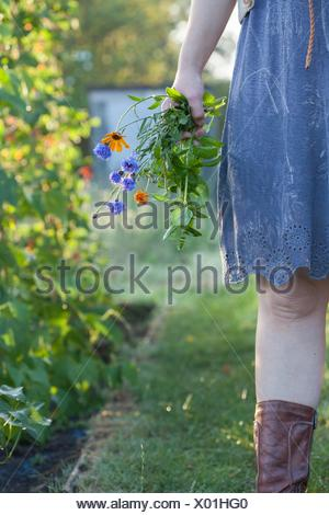 Mature woman standing in garden, holding wild flowers, mid section - Stock Photo