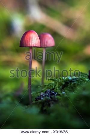 Wild Mushrooms in forest, Sweden - Stock Photo