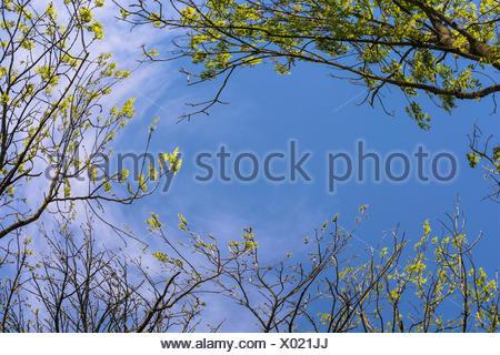 blue sky through the treetops - Stock Photo