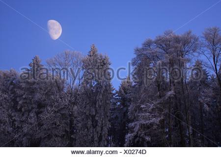 forest winter moonshine moon Switzerland Europe nature trees tree snow blue sky dusk dawn morning evenin - Stock Photo