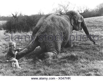 Girl pulls elephant on tail, England, Great Britain - Stock Photo