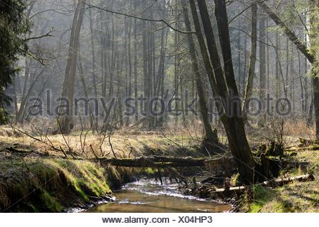 Forest steam, Upper Palatinate, Bavaria, Germany, Europe - Stock Photo