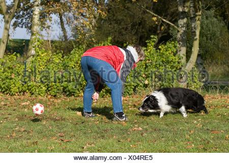playing with Border Collie - Stock Photo
