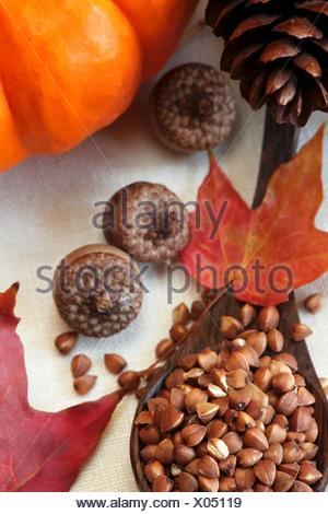Roasted Kasha in a Wooden Spoon; Autumn Leaves, Acorns and Pumpkin - Stock Photo