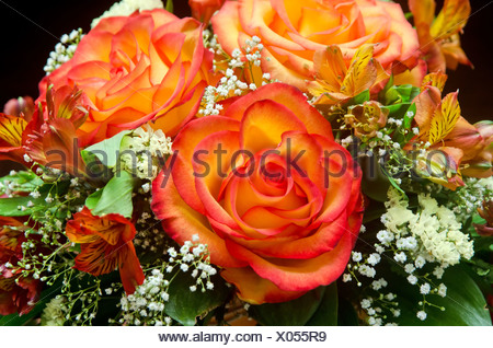 Orange roses flower bouquet stock photo 52223340 alamy orange roses flower bouquet stock photo mightylinksfo