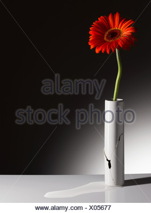 Red flower in broken vase - Stock Photo