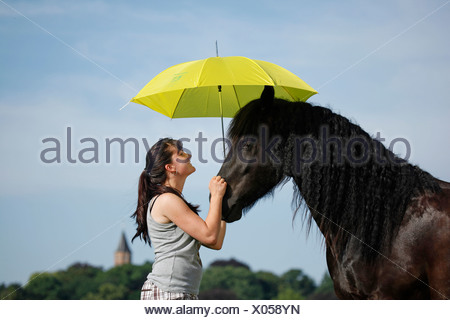 Friesian Horse Portrait - Stock Photo