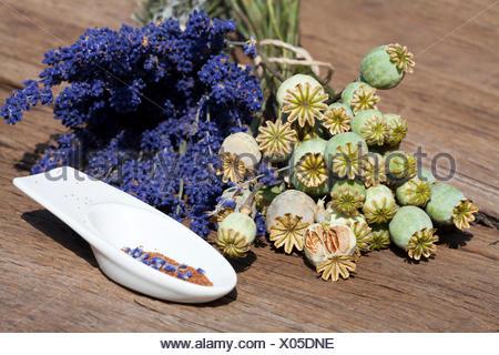 Sommerernte von Lavendelblüten, Schlafmonkapseln und Mohnsamen in einer kleinen Porzellanschale auf einem rustikalem Holztisch - Stock Photo