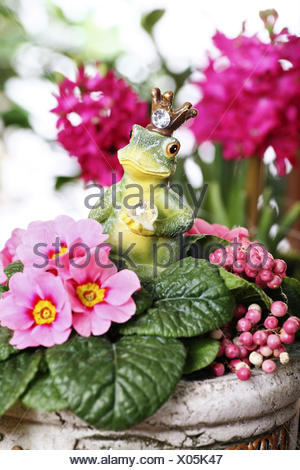 Flowerpot with frog figure, figure, frog prince, Primrose and boxberry, Primula, Gaultheria, - Stock Photo