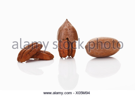 Pecans and Pecan nuts - Stock Photo