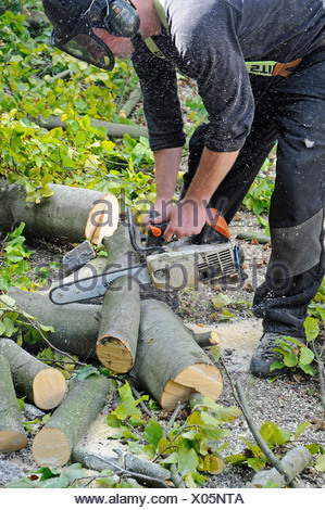 Tree care services, wood worker cutting a tree trunk with a chain saw, PublicGround - Stock Photo