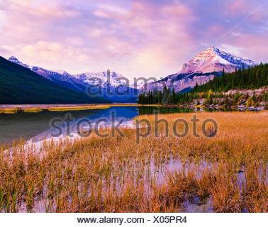 Tangle Ridge and Mount Kitchener at sunset reflected in pond near Beauty Creek Hostel, Jasper National Park, Alberta - Stock Photo