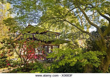 kamelie camellia japonica stock photo 85988768 alamy. Black Bedroom Furniture Sets. Home Design Ideas