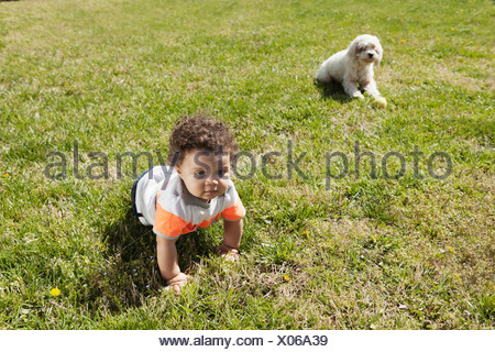 Child crawling on grass, dog in background - Stock Photo