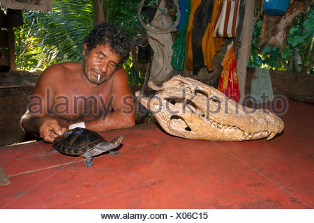 Skull of Black Caiman and Amazon Turtle - Amazonas Brazil - Stock Photo