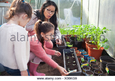 Mother and daughter planting seedlings - Stock Photo