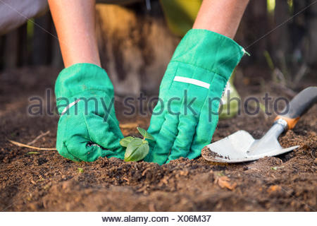 Close-up of gardener planting seedling in dirt at garden
