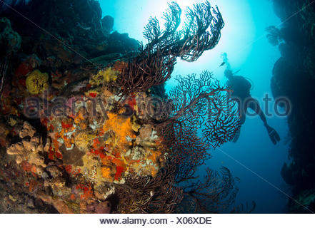 Diver on coral reef. - Stock Photo