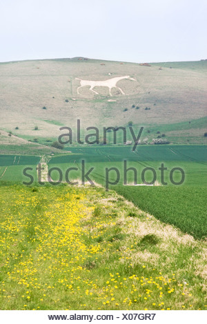 Great Britain, England, Wiltshire, Vale of Pewsey, 'White Horse' carved on hill - Stock Photo