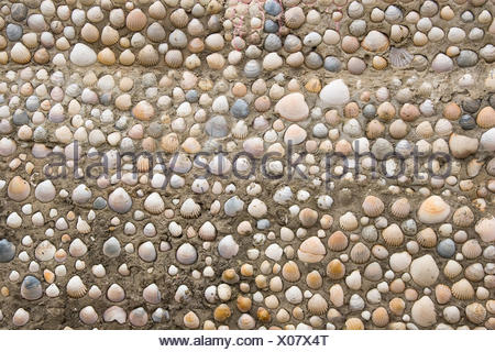 arrangement, object, colour, stone, shell, look, glancing, see, view, looking, - Stock Photo