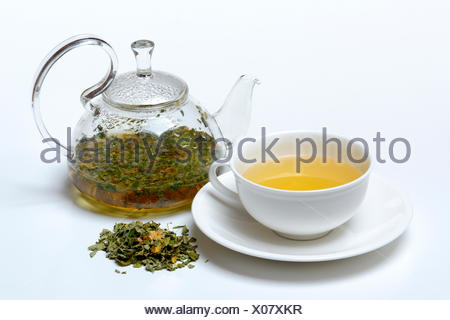 Moringa-Tee in Tasse und Teekanne und Moringablaetter, Moringatee - Stock Photo