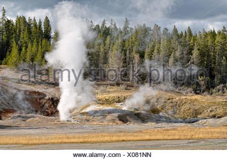 Black Growler Steam Vent, Porcelain Basin, Norris Geyser Basin, Yellowstone National Park, Wyoming, USA - Stock Photo