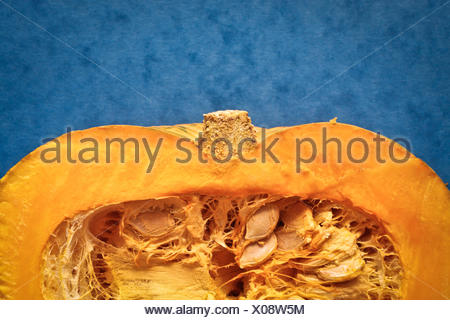 Squash - Stock Photo
