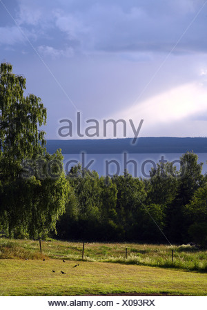 Landscape and birch trees with sunbeam on the Siljan lake in background - Stock Photo