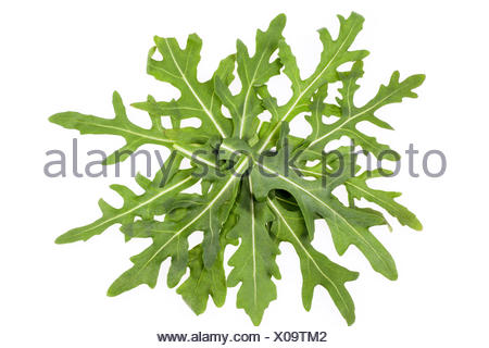 composition of fresh leaves of rucola isolated on white background - Stock Photo