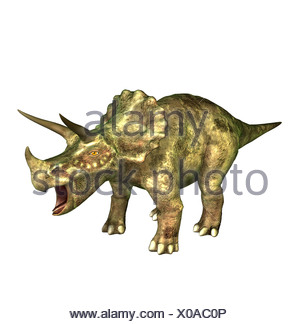 The Triceratops is called three-horn and about 9 m long and in the Cretaceous period occurred. The Triceratops is one of the - Stock Photo