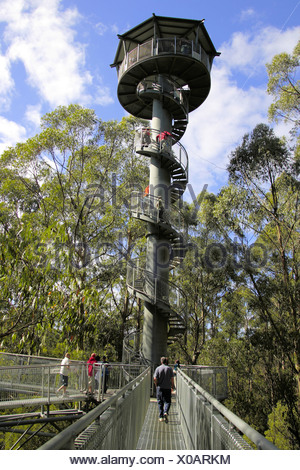 Otway Fly Tree Top Walk in the rainforest, Victoria, Australia - Stock Photo