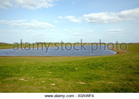 meadow at Rhine river on Bislicher Insel, Germany, North Rhine-Westphalia, Nature Reserve Bislicher Insel - Stock Photo