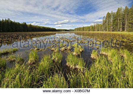 Swan Lake, Colter Bay, Grand Teton National Park, Wyoming, USA, North America - Stock Photo