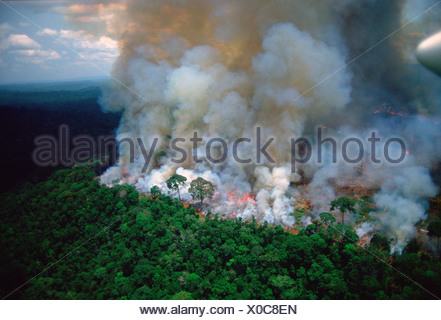 Amazon rain forest afire. - Stock Photo