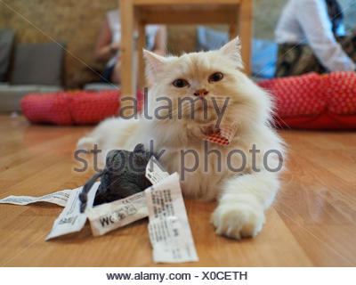 Close-Up Of Cat Resting On Hardwood Floor - Stock Photo