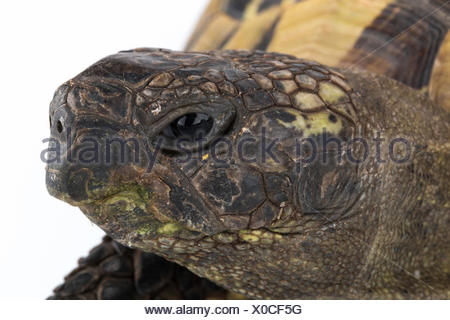Closeup tortoise head - Stock Photo