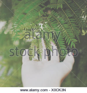 Woman's hand touching a fern leaf - Stock Photo