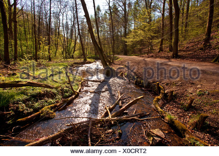 Borbach valley in spring, Germany, North Rhine-Westphalia, Ruhr Area, Witten - Stock Photo